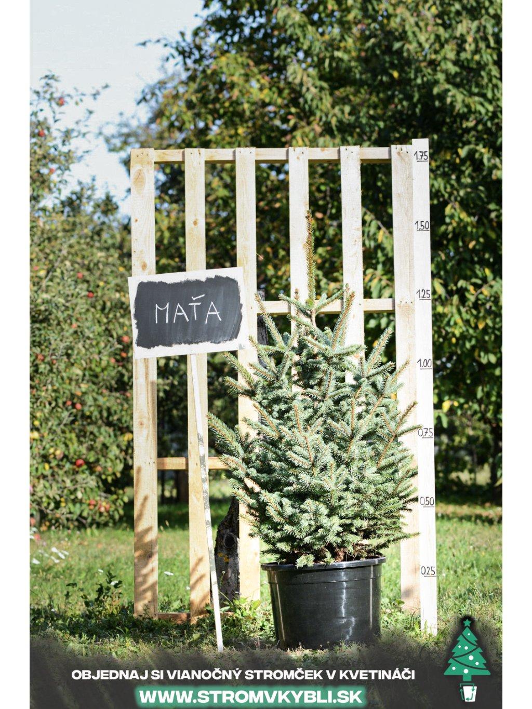 Vianocny stromcek v kvetinaci stromvkybli Mata 9188 3 2 3 3
