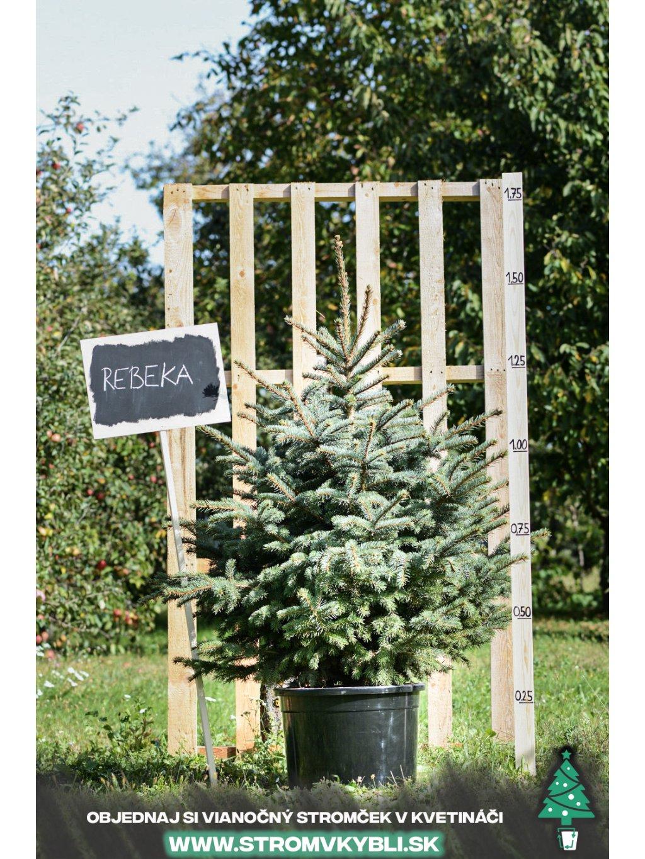Vianocny stromcek v kvetinaci stromvkybli Rebeka 9163 3 2 3 3
