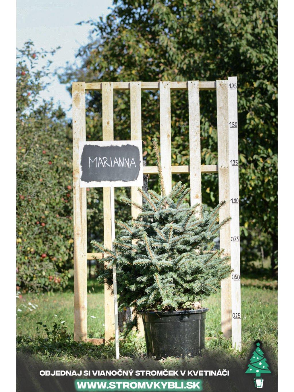 Vianocny stromcek v kvetinaci stromvkybli Marianna 9183 3 2 3 3