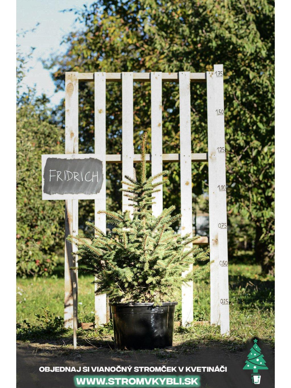 Vianocny stromcek v kvetinaci stromvkybli Fridrich 9584 3 2 3 3