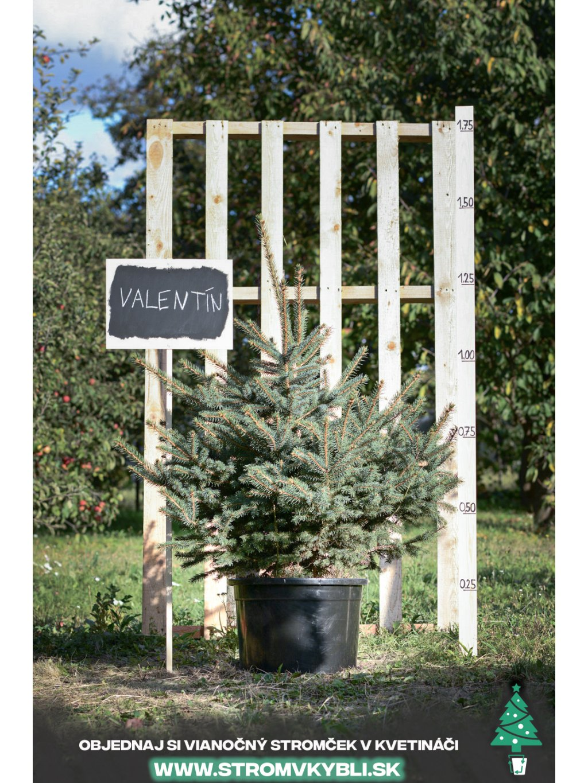Vianocny stromcek v kvetinaci stromvkybli Valentin 9461 3 2 3 3