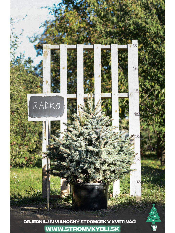 Vianocny stromcek v kvetinaci stromvkybli Radko 9588 3 2 3 3