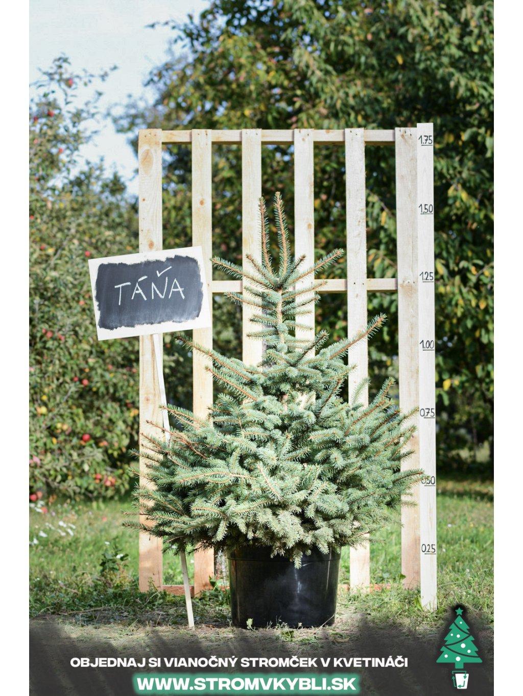 Vianocny stromcek v kvetinaci stromvkybli Tana 9316 3 2 3 3
