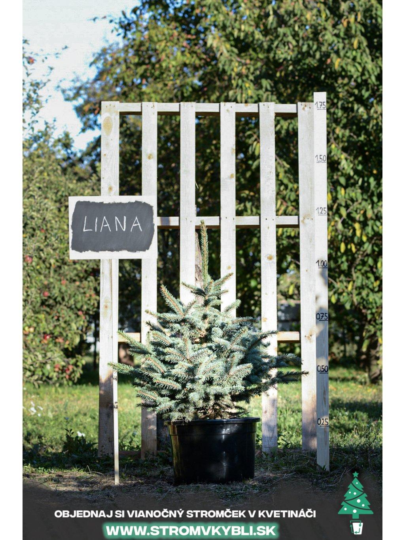 Vianocny stromcek v kvetinaci stromvkybli Liana 9477 3 2 3 3