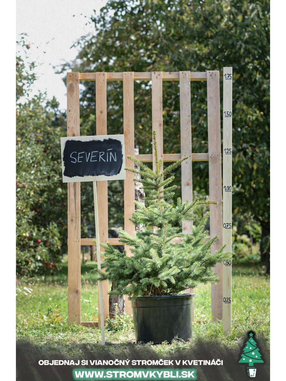 Vianocny stromcek v kvetinaci stromvkybli Severin 9232 3 2 3 3
