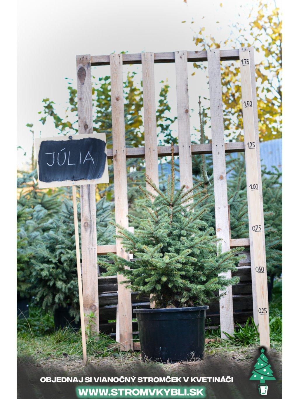 Julia 0389