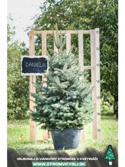 Vianocny stromcek v kvetinaci stromvkybli Daniela 9217 3 2 3 3
