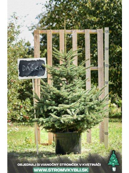 Vianocny stromcek v kvetinaci stromvkybli Daska 9238 3 2 3 3