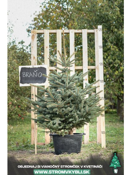 Vianocny stromcek v kvetinaci stromvkybli Brano 9616 2 3 3
