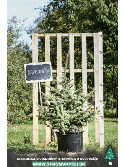Vianocny stromcek v kvetinaci stromvkybli Drahomira 9271 3 2 3 3