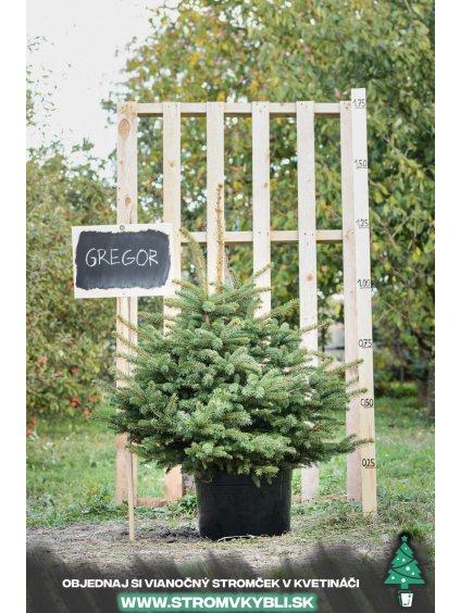 Vianocny stromcek v kvetinaci stromvkybli Gregor 9634 2 3 3