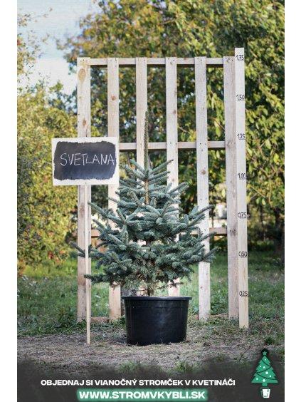 Vianocny stromcek v kvetinaci stromvkybli Svetlana 9654 2 3 3