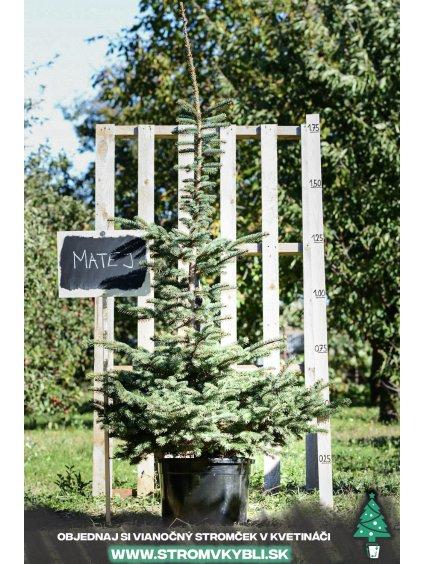 Vianocny stromcek v kvetinaci stromvkybli Matej 9541 3 2 3 3