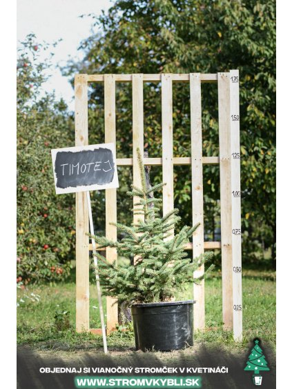 Vianocny stromcek v kvetinaci stromvkybli Timotej 9294 3 2 3 3