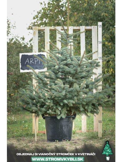 Vianocny stromcek v kvetinaci stromvkybli Arpi