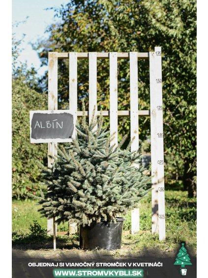 Vianocny stromcek v kvetinaci stromvkybli Albin