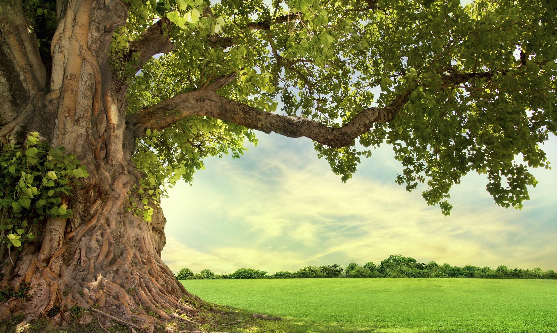 Význam stromů pro kvalitu života