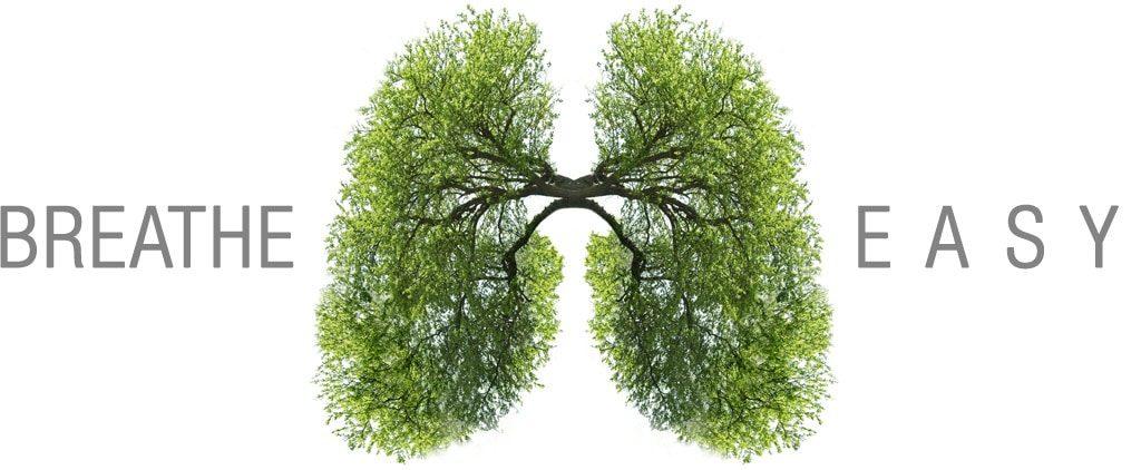 Jak stromy čistí vzduch