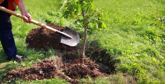 Jak nejlépe zasadit strom, aby zdárně rostl dlouhá léta
