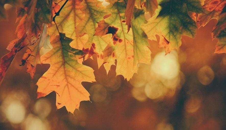 Vlasy na podzim