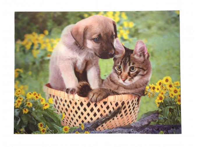pes kočka