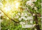 Klece a lucerny