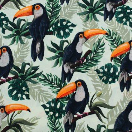 Kočárkovina - tukani na světlé