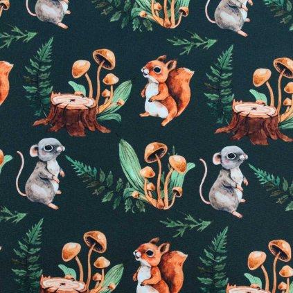 veverky a myšky