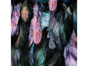 Kočárkovina - Peříčka růžová