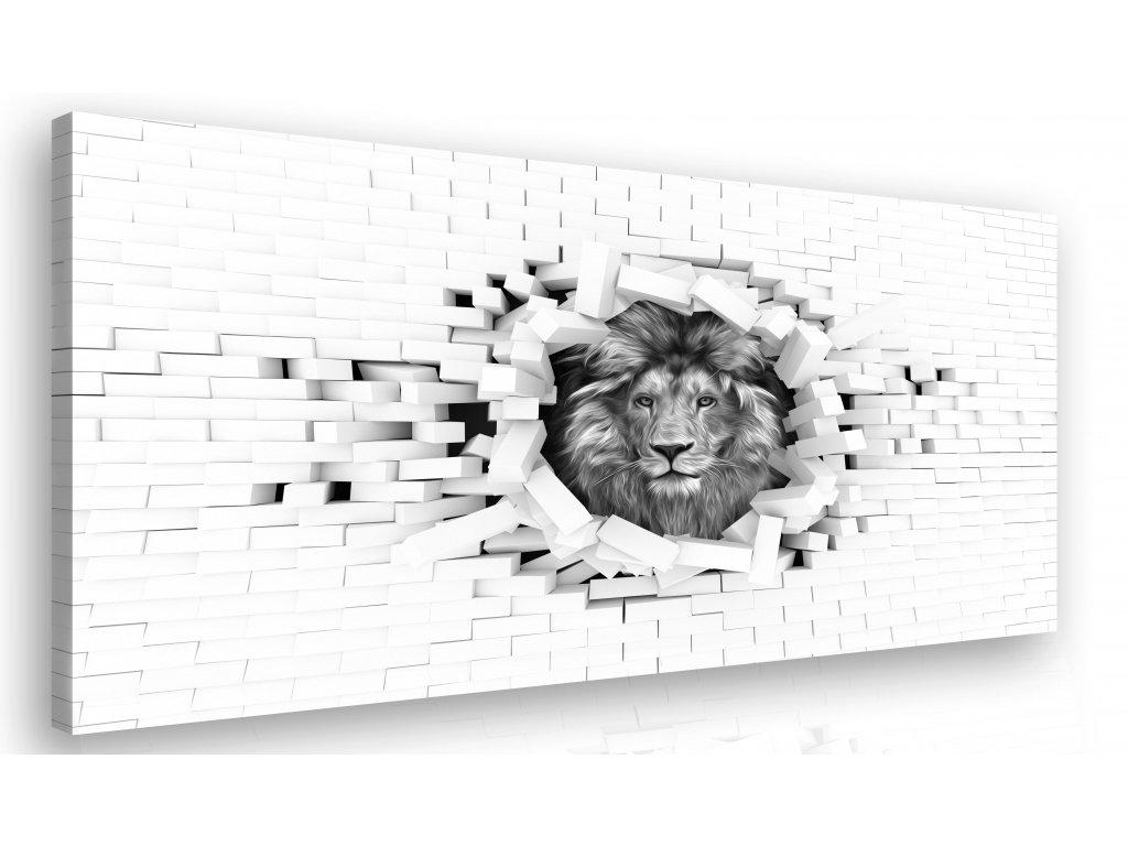 Černobílý obraz - lev (Velikost 120x80 cm)