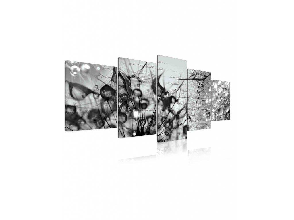 10101141 cernobily obraz krasa v kapkach rosy