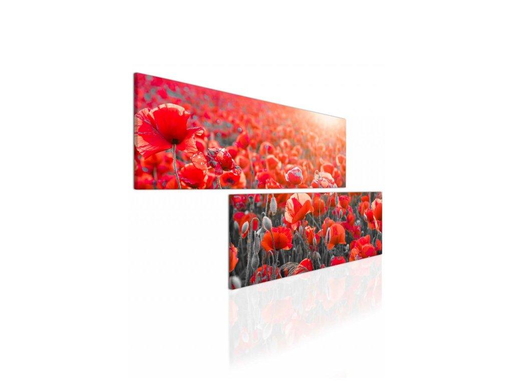 Dvoudílný obraz vlčí mák (Velikost (šířka x výška) 120x60 cm)