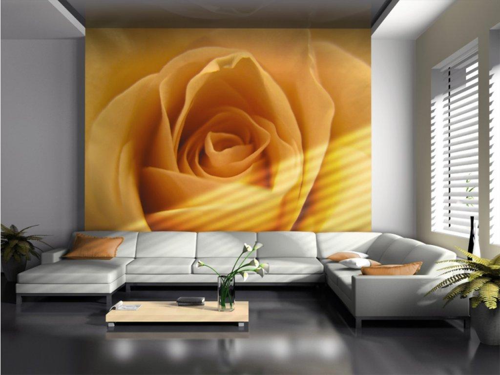 Fototapeta - Žlutá růže (Rozměry (š x v) a Typ 147x116 cm - samolepící)