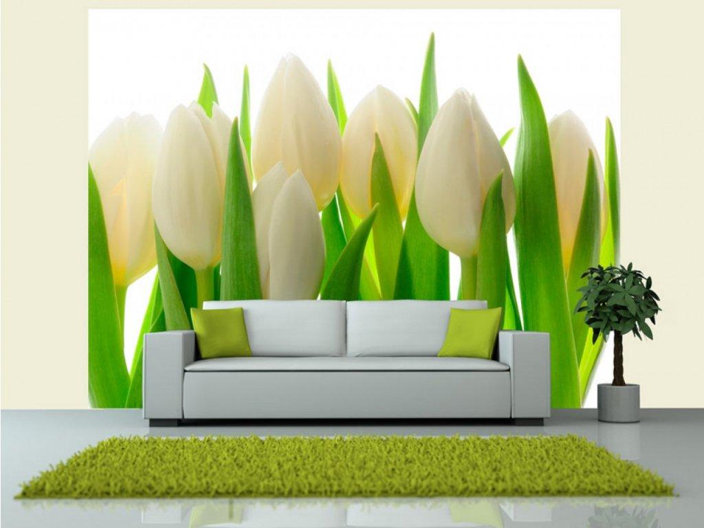 Fototapeta bílé tulipány (Rozměry (š x v) a Typ 147x116 cm - samolepící)