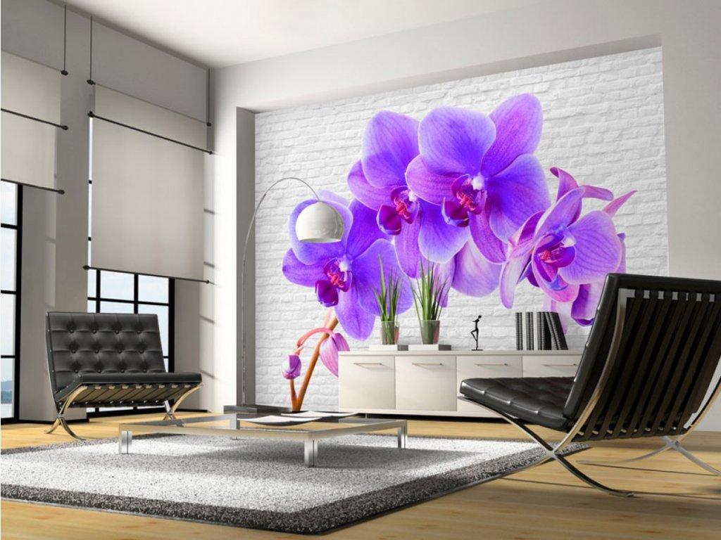 Fototapeta lila orchidej (Rozměry (š x v) a Typ 147x105 cm - samolepící)