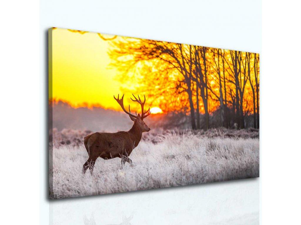 Jelen v ranním slunci (Velikost 80x50 cm)