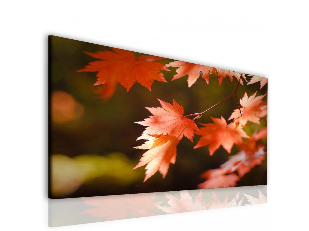 Kouzlo podzimního listu (Velikost 120x80 cm)