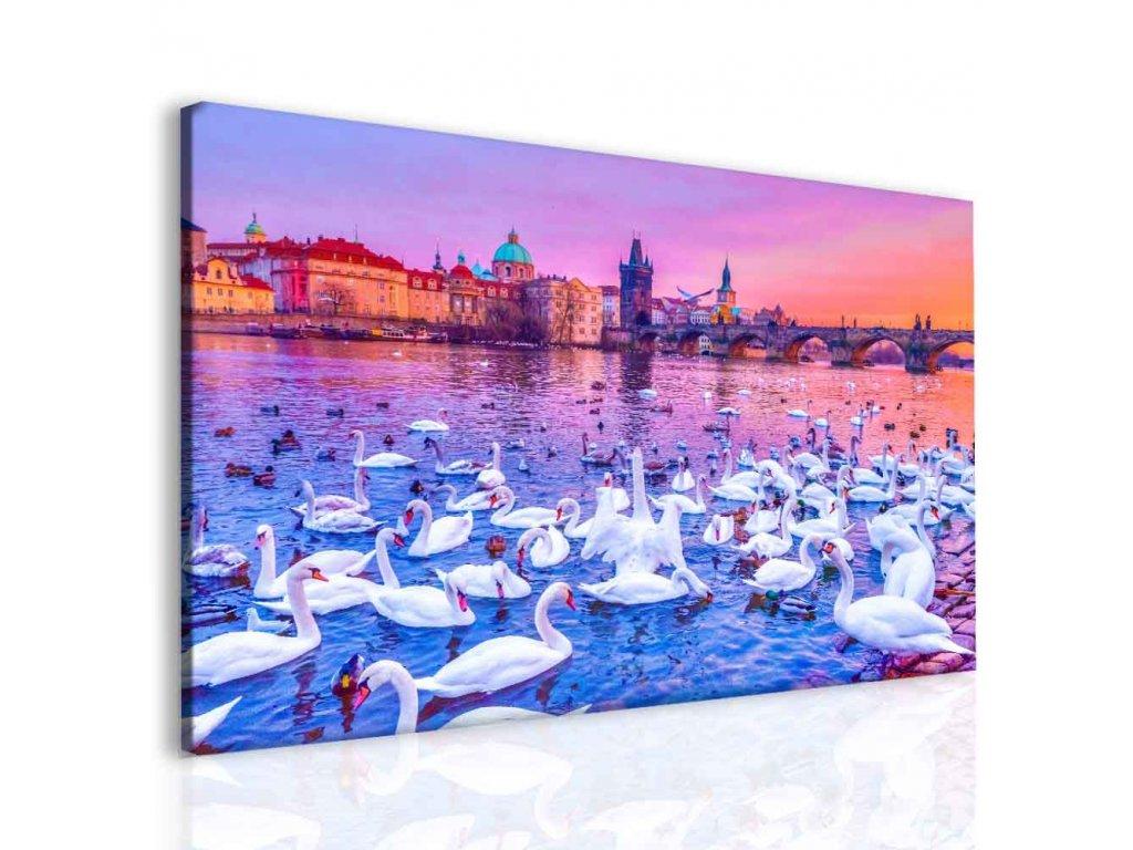Labutě na Vltavě (Velikost 120x80 cm)