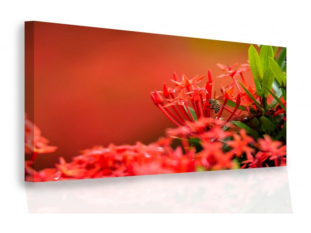 Moderní obraz - červené květy (Velikost (šířka x výška) 150x100 cm)