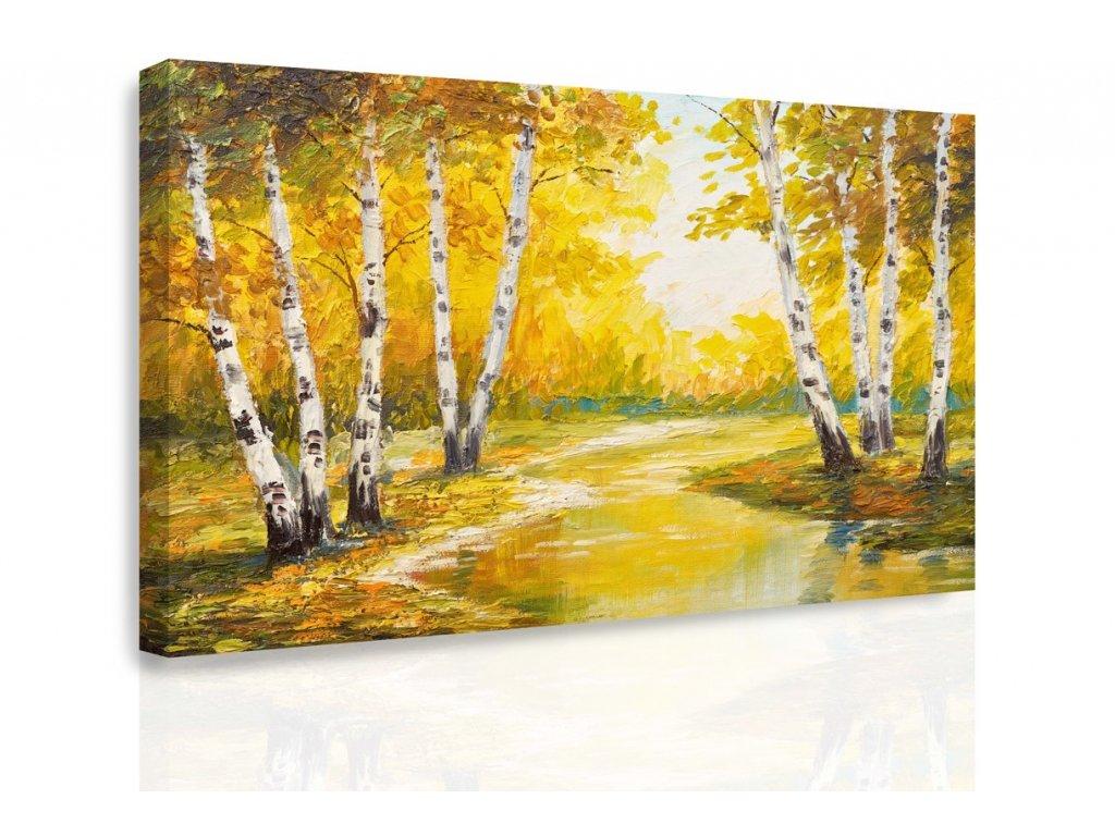 Obraz - Břízy (Velikost 90x60 cm)
