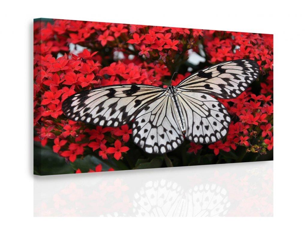 Obraz - Černobílý motýl (Velikost 120x80 cm)