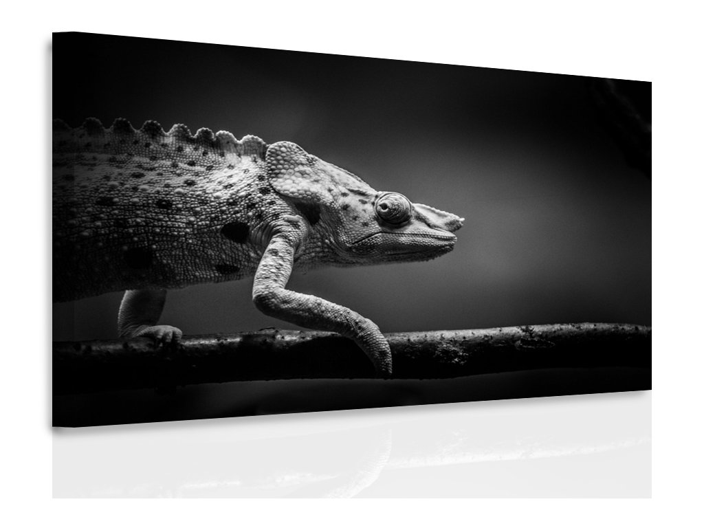 Obraz - chameleon (Velikost 150x100 cm)