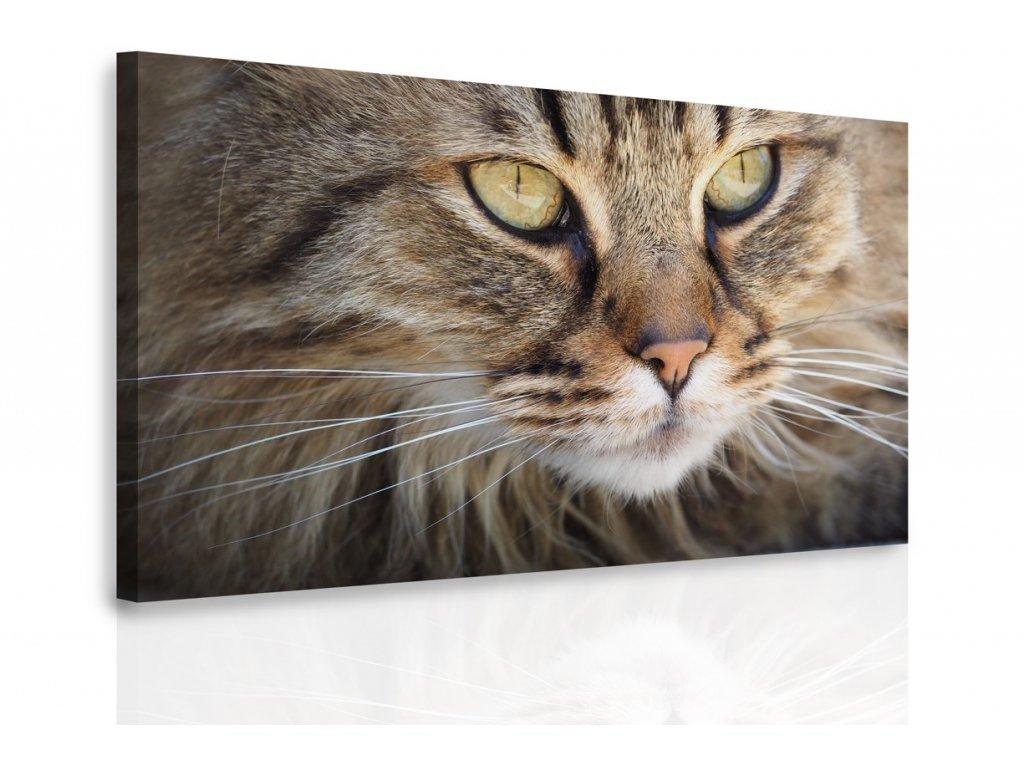 Obraz - Kočičí oči (Velikost 120x80 cm)