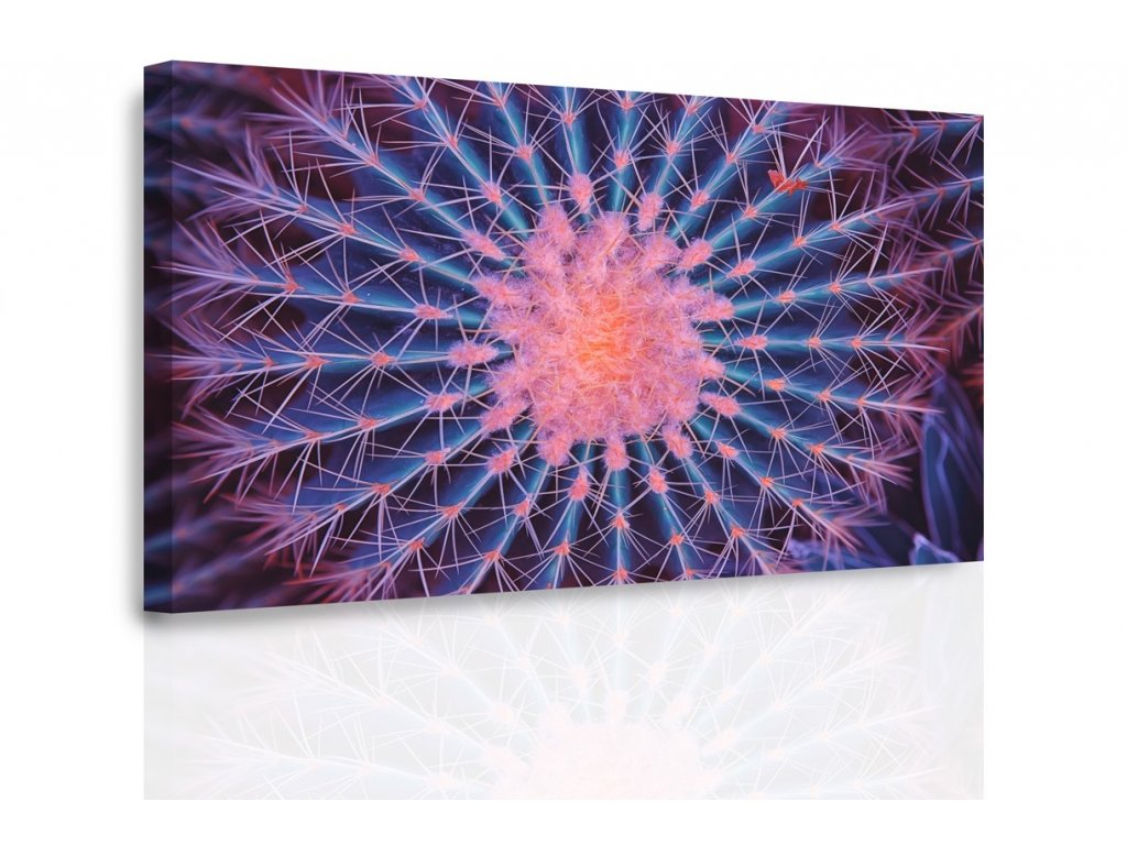 Obraz - Makro kaktus (Velikost 150x100 cm)
