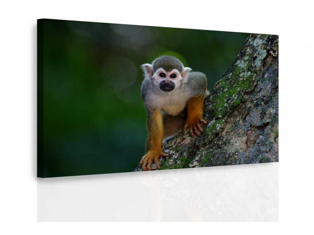 Obraz - Opička na stromě (Velikost 120x80 cm)