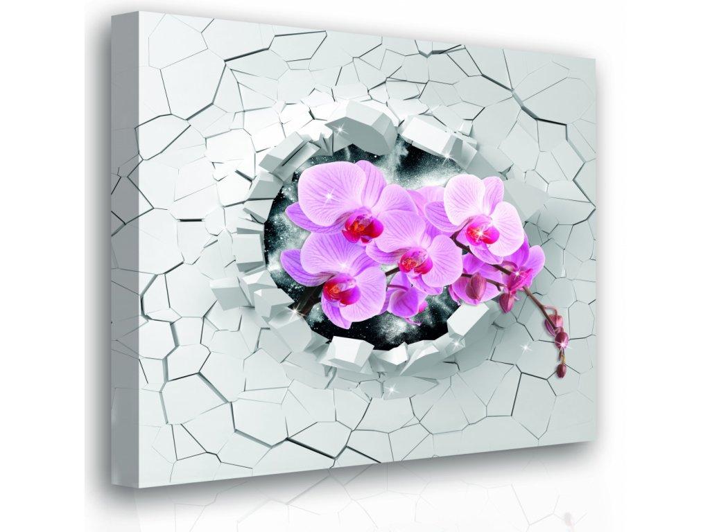 Obraz - orchidej (Velikost (šířka x výška) 100x100 cm)