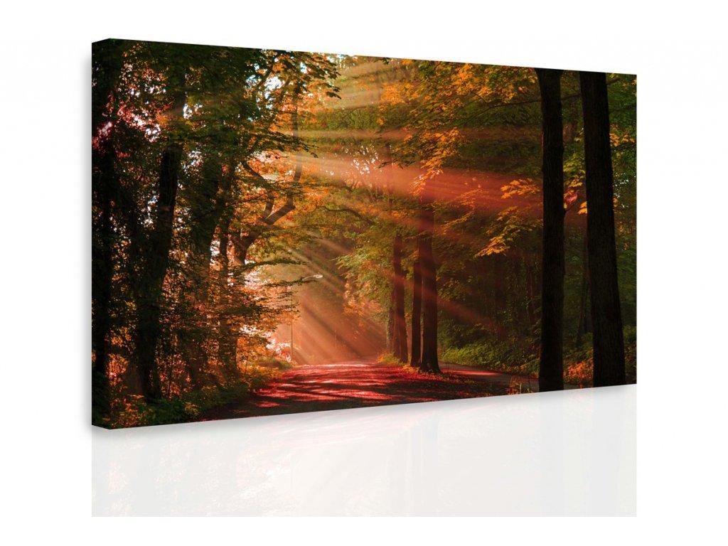 Obraz - Podzimní les (Velikost 120x80 cm)