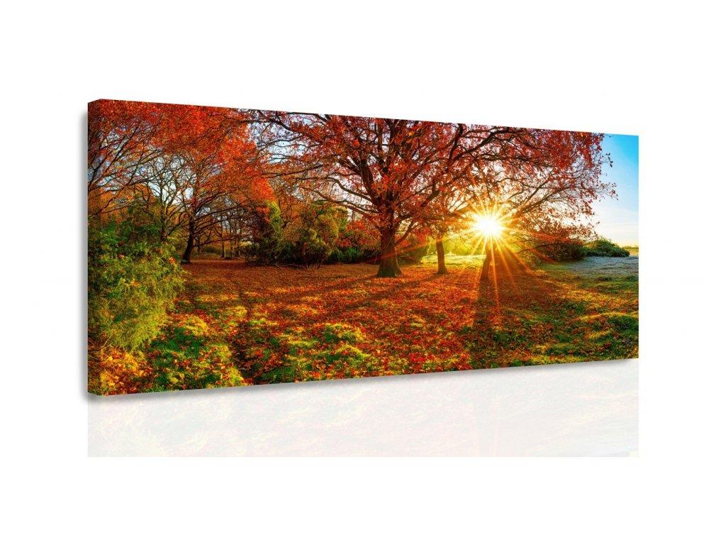 Obraz - Podzimní slunce (Velikost 80x40 cm)