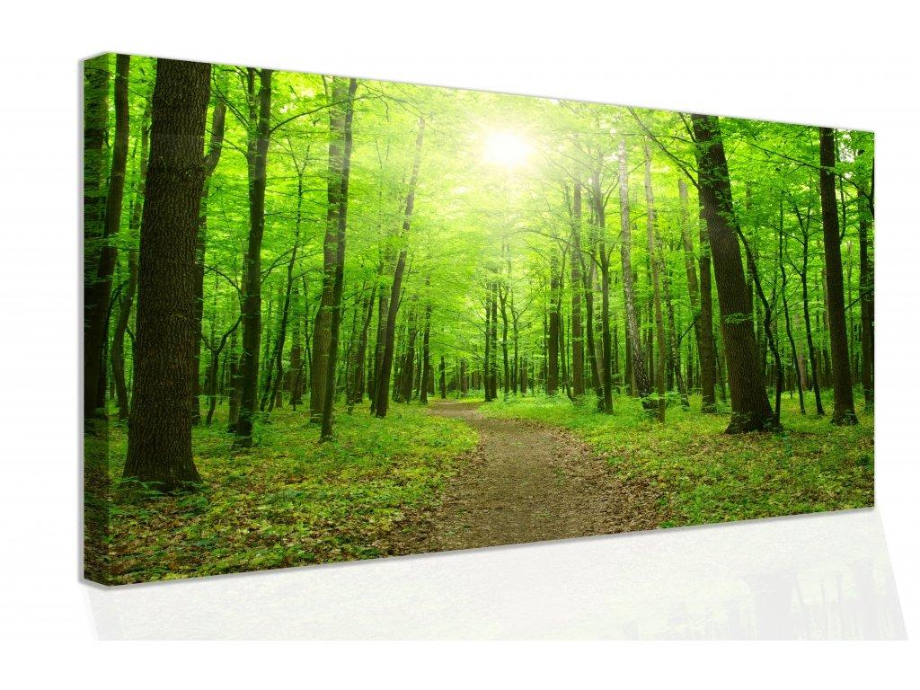 Obraz - procházka po lese (Velikost 150x100 cm)