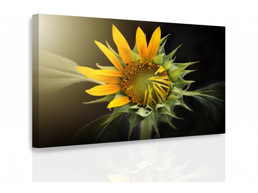 Obraz - Rozkvět (Velikost 120x80 cm)